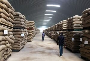 cocobod loan, cocoa warehouse